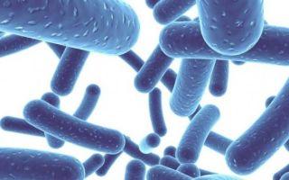 Пробиотики при запорах: когда начинать принимать?